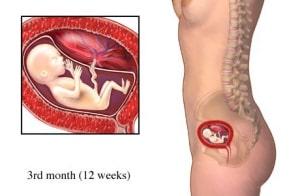Kích thước bụng bầu 3 tháng ra sao